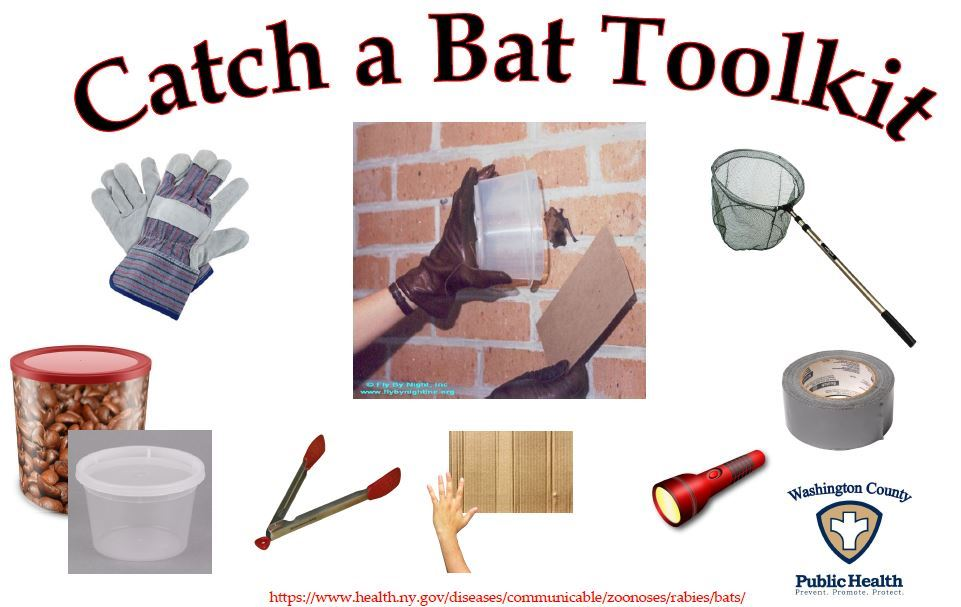 Catch a Bat Toolkit Pic